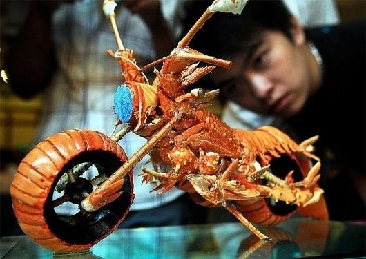 Lobster Bike » Design You Trust – Design and Beyond! #foods #photo #arts #bike #lobster