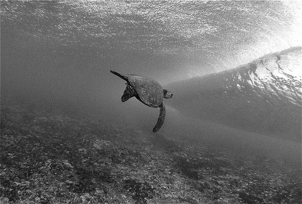 Exposure   SURFER Magazine #ocean #wave #photography #sea #turtle #underwater