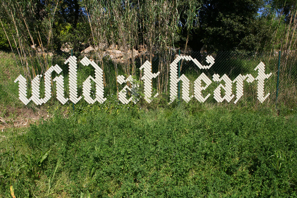 Wild at heart #lettering