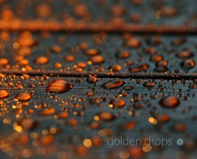 golden drops #regen #color #rain #gold #drops