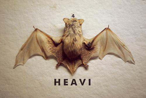 http://www.gtez.tumblr.com/ #photo #bat #animal #heavi