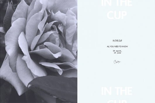 in the cup #flower #photo #patten #invitation