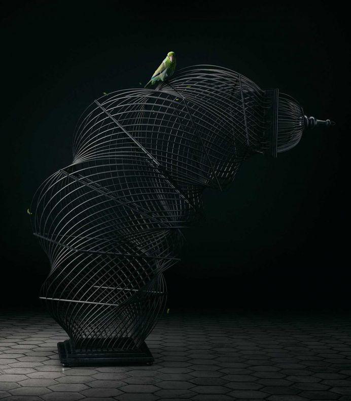 Free Bird: Creative Photo Manipulations by Mike Campau