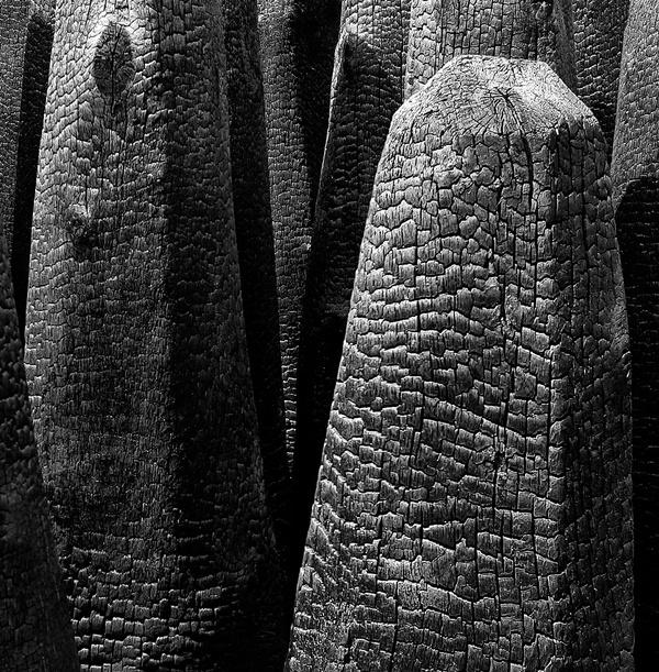 photowilliams: Photo #wood #photography #black