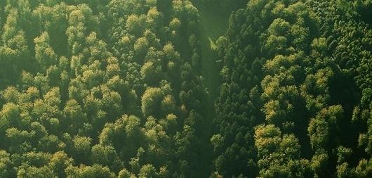 15.jpg (800×383) #aerial #belgium #photography #nature #plane #brussels #airport