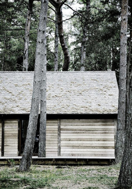spejlvendt #wood #timber #architecture #trees