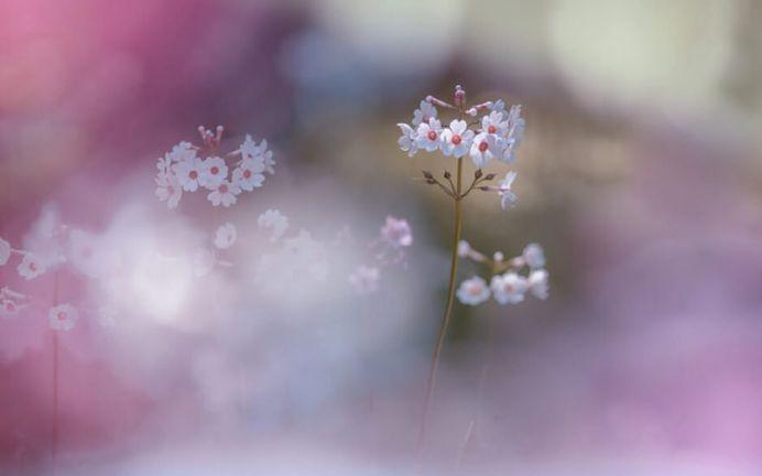 Beautiful Macro Flower Photography by Miyako Koumura