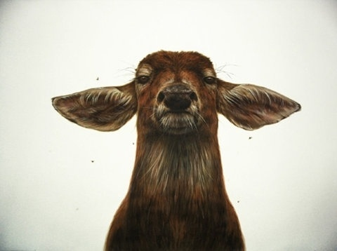 FFFFOUND! | B A S I C S P A C E #deer #drawing #doe #mammal #illustration #painting #animal