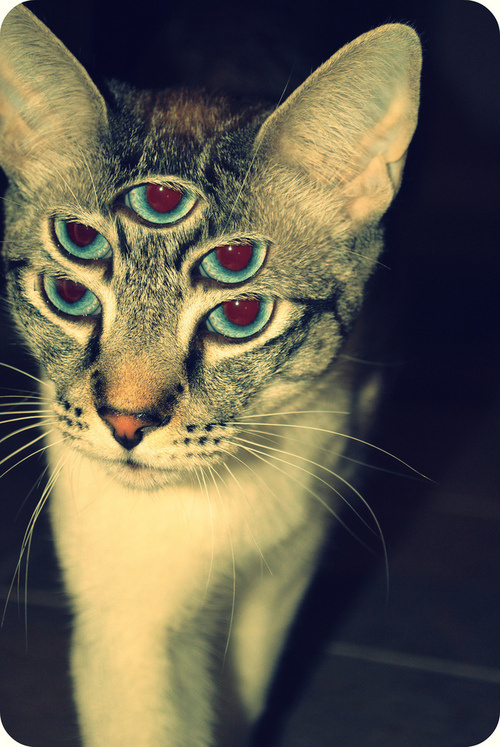 cat eyes #eyes #cat