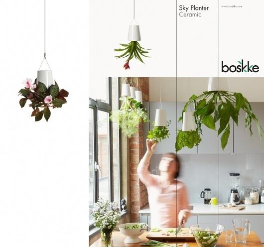 Boskke Identity | Bibliothèque Design