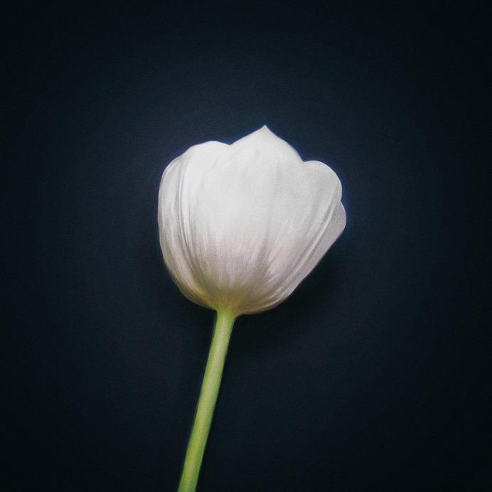 Herm the Younger Tulip, 2019 Portfolio | Instagram | Contact