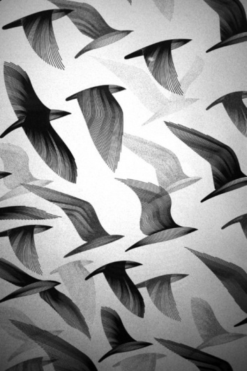 Merde! - Graphic design #birds #design #graphic