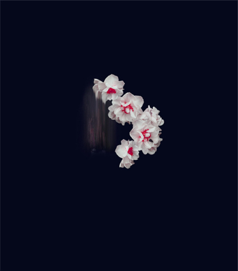 Simone Webb | PICDIT #flower #photo #photography #art