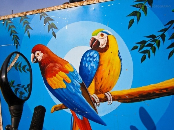 The Virtual World by Shekhar Kumar, via 500px #birds #wall #parrot #painting