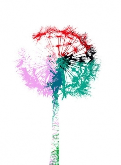 CHRIS KEEGAN #chris #pink #illustration #dandelion #flower #keegan