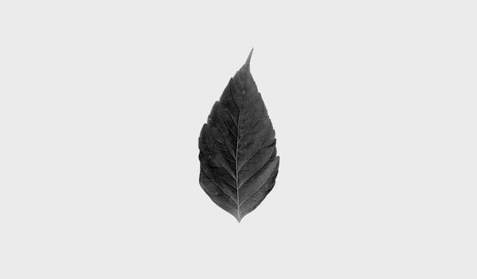 Matthew Hancock / Four Great Titchfield Street #logotype #leaf #design #graphic #marque #brand #identity #logo
