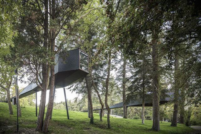treesnakehouse-7 #architecture #house #tree