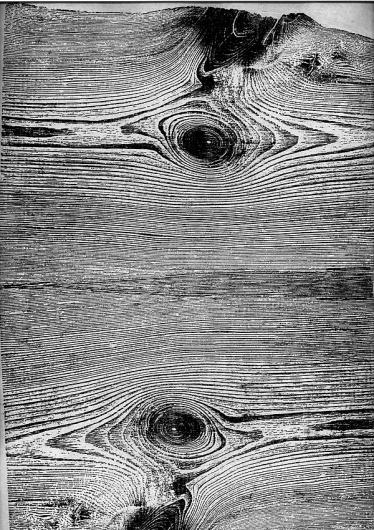 wood : Martha Richter #information #tree #wood #woodprint #trees