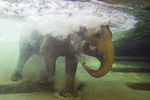 FFFFOUND! | ♥ Dinner for Mouschi #photography #water #elephant