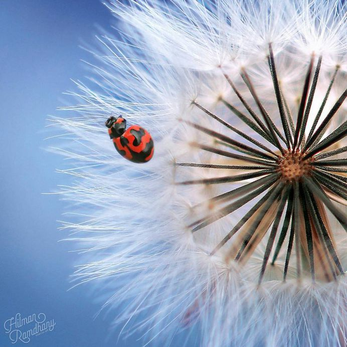 Insanely Detailed Macro Photos Of Insects by Hilman Ramdhany