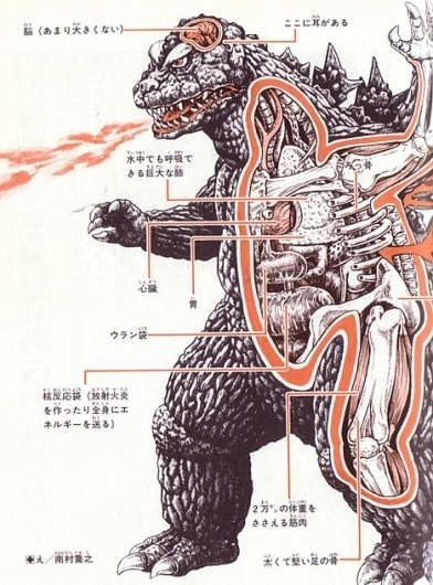 Kaiju anatomical drawings ::: Pink Tentacle #anatomical #drawing #godzilla