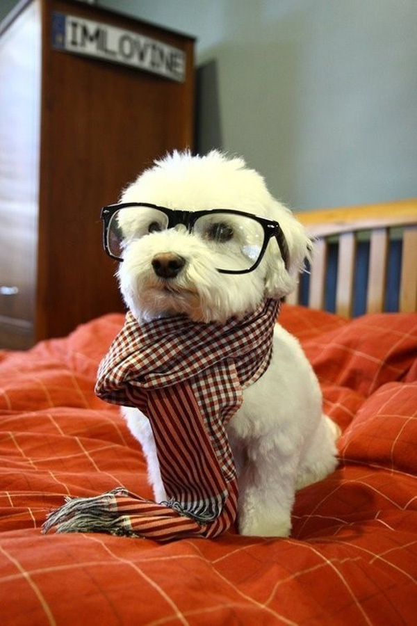 50 Cute Puppies I Adore #cute #puppies