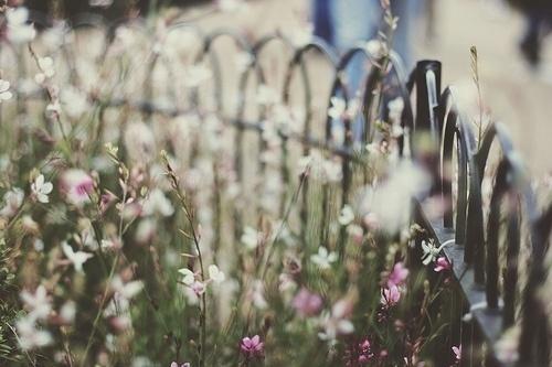 je t'aime. #flowers