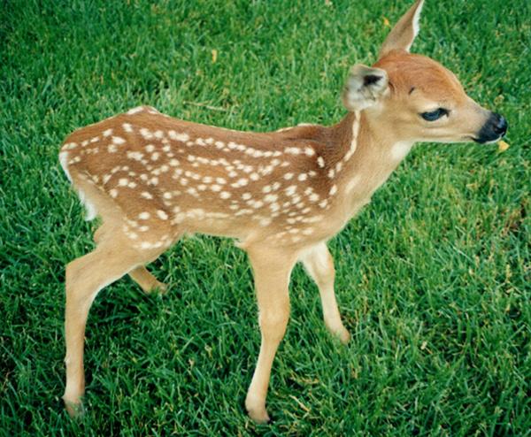 Cute Animals #cute #animals