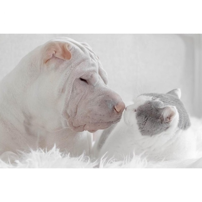 Annie Jacob Captures Unconventional Friendship Between A Shar Pei And His Cat