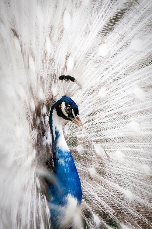 Likes   Tumblr #paw #bird