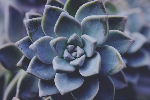 Succulent #cacti #plants