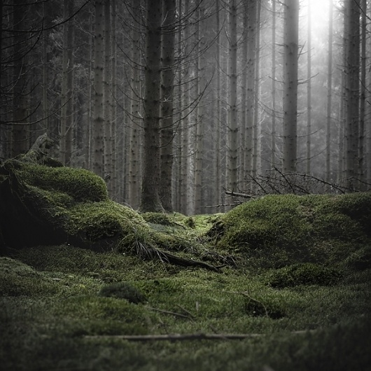 Wald on the Behance Network #woods #photography