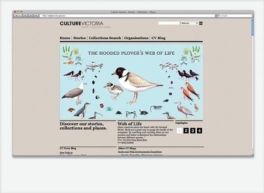 Culture Victoria Website | SUBFAUNA / Bench.li #birds #illustration #web #grey
