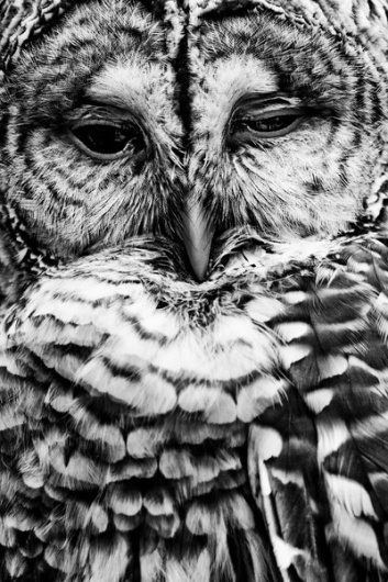 tumblr_lzyt38umfd1qa4s0qo1_400.jpg (400×600) #owl