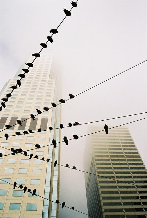 Tumblr #photo #city #fog #birds #scycscrapers