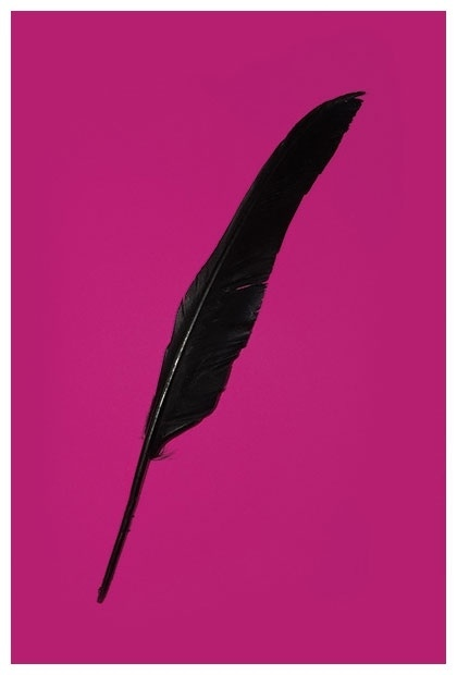 aaafeather2.jpg 420×620 pixels #simple #photo #feather