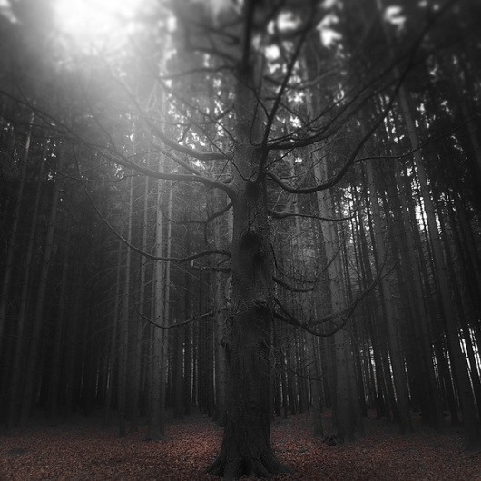 Forest on the Behance Network #forest #photography #fog