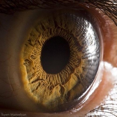 Tumblr #eye #photography #biology