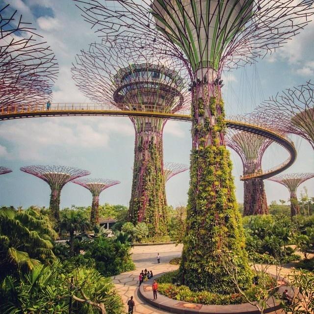 Jan Kloke - Marina Bay Singapore, Supertree Grove Gardens by the Bay #urban #bay #modern #futuristic #by #the #gardens #future #marina #architecture #sands #singapore #jungle