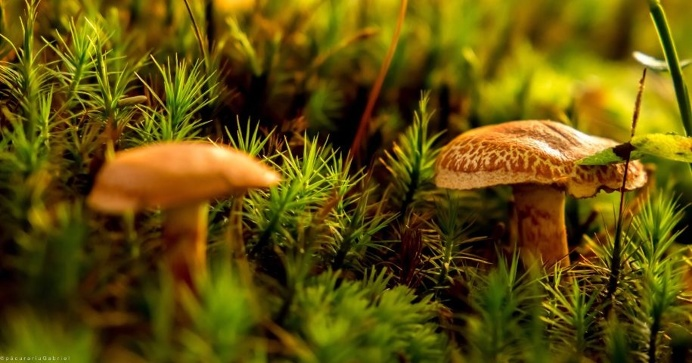 #nature#outdoors#photography#mashrooms#green