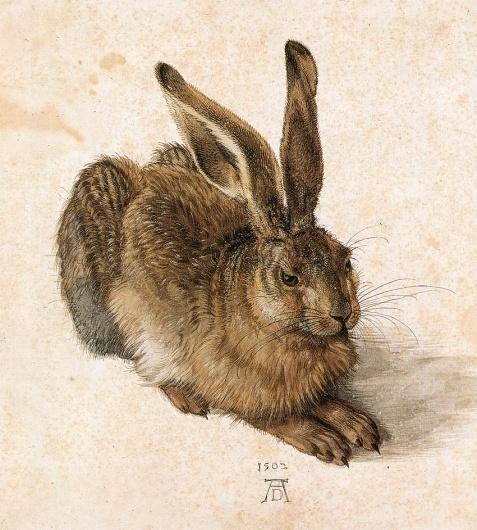 albrechtdurer_young_hare.jpg 850×943 pixels #rabbit