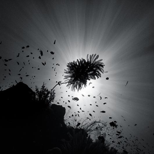 水中の写真 : Hengki Koentjoro Photography   Ghost Room #ocean #mono #photography