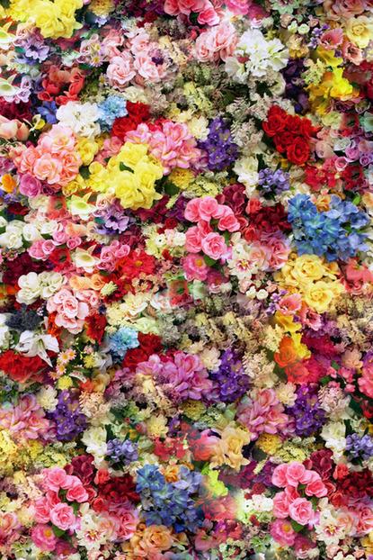 Flowers via Baubauhaus. #photo #flowers