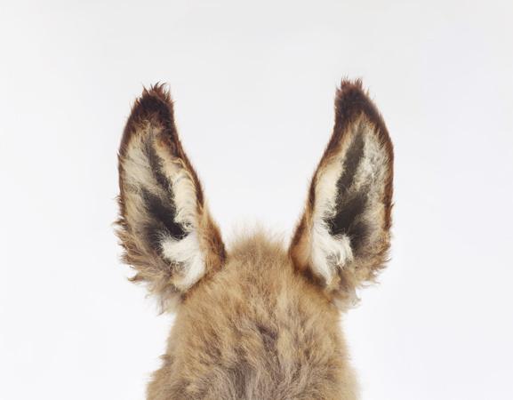 Im So Normal #donkey