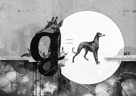 Orlagh Murphy - Rag Fief, 2011 #giraffe #white #greyhound #black #illustration #orlagh #collage #murphy