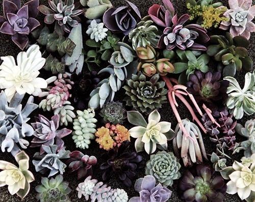 image #flora