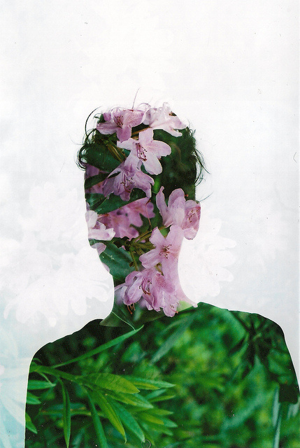 Liam Hart #multiple #exposure #liam #photography #hart #flowers