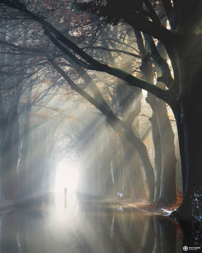 Mystical and Fine Art Forest Photography by Rob Visser