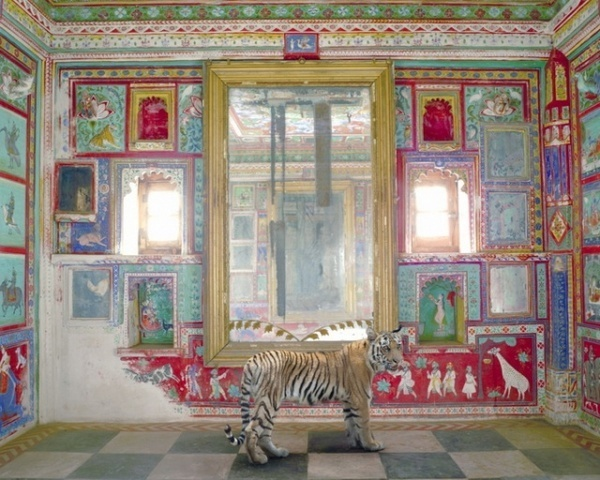Photography by Karen Knorr #inspiration #photography #animals