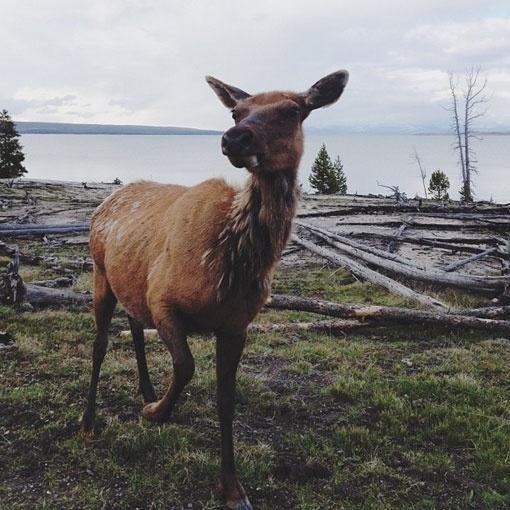 kevinruss_04.jpg (510×510) #deer #timber #photography #lake #america